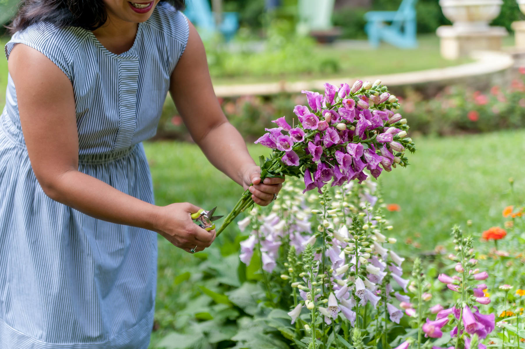How to Grow Cool Season Flowers in Central Florida