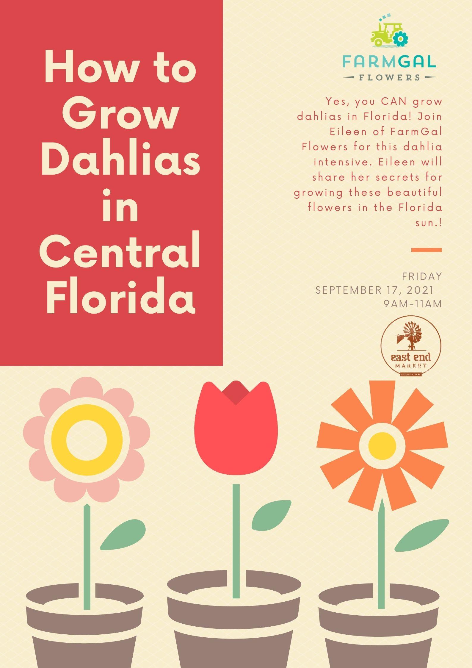 How to Grow Dahlias in Central Florida
